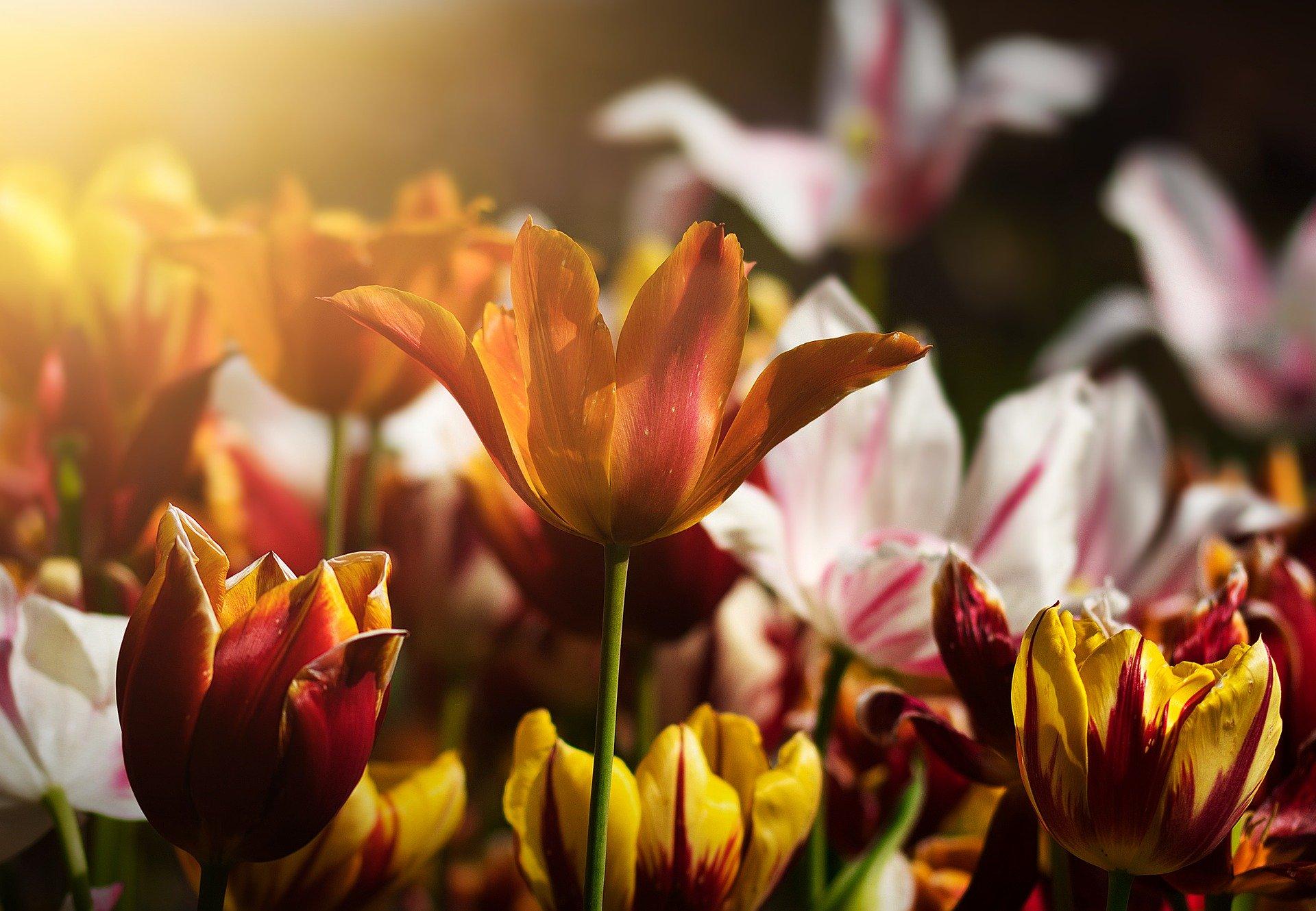 Extra geld beschikbaar voor de bloementelers en aardappelboeren